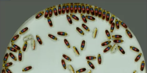 Focus: <i>Video</i>—Roach-like Robots Act Collectively