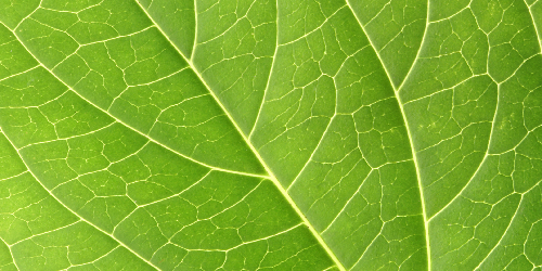 Focus: Leaf-Like Veins Are Key to Efficient Pump