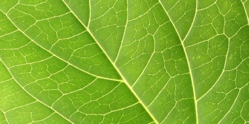 Focus: Leaf-Like Veins Are Key to Efficient Pump
