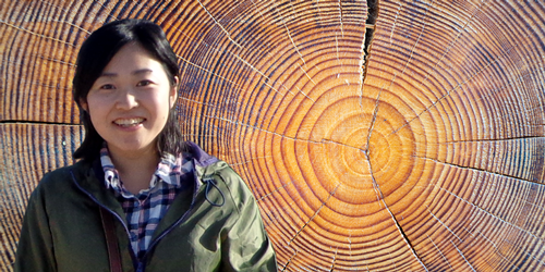 Sun's Past Hidden in Tree Rings