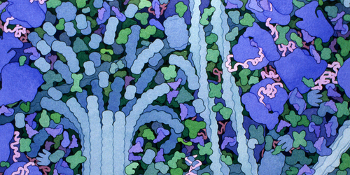 Continuous Jostling Helps Protein Perform