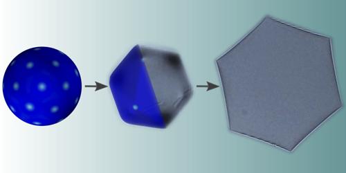 The Strange Shapes of Cooling Droplets