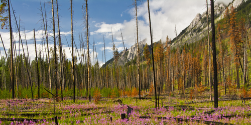 New Behaviors from an Old Forest Fire Model