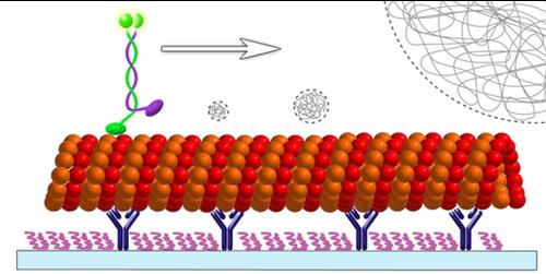 Focus: Stalling a Molecular Motor