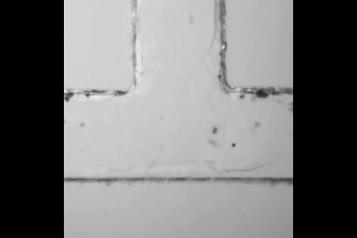 Physics - Focus: Fluid Flow through T-Junction Traps More